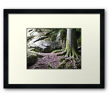 Shady Place to Read Framed Print