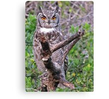 Bubo africana - Spotted Eagle Owl Canvas Print