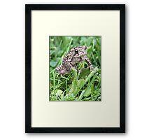 Kermit's Friend. Framed Print