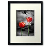 Tulips at Night Framed Print