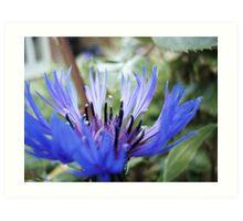 Bloom of Blue Art Print