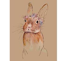 Little Bunny Photographic Print