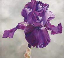 Purple Iris by Charlotte Yealey