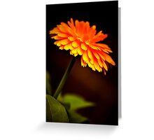 Canada Flower Greeting Card