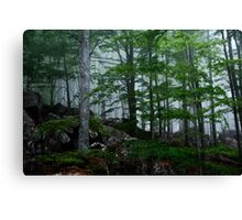 A forest from almost ghostly appearance Canvas Print