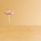 Part of Allium by Ronny Falkenstein