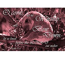 Bow Down - Psalm 95:6 Photographic Print