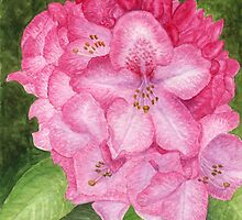 Pink Azalea - watercolor painting by M Rogers