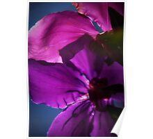 Tranquil Petals Poster