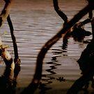 Mangrove Muddlings by Martice