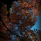 Oak Swirls by Martice