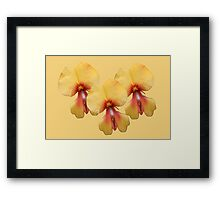 Pea Flower Framed Print