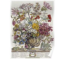 Robert Furber - Twelve Months Of Flowers. Still life with flowers: flowers, bumblebee , carnations, peonies, roses, tulips,  marigolds,  life, garden, blossom, vase Poster