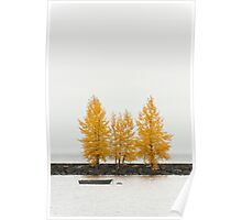 Trees in autumn color Poster