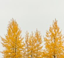 Trees in autumn color Sticker