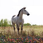 Horse in a Field of Flowers~ Throw Pillow by Penny Odom