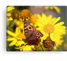 Butterfly blessing - Meadow Argus Metal Print