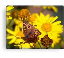 Butterfly blessing - Meadow Argus Canvas Print