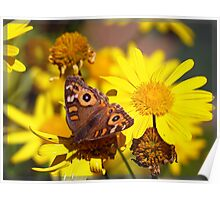 Butterfly blessing - Meadow Argus Poster