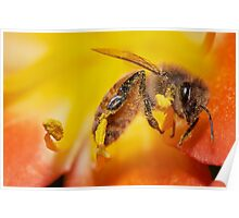 Bee covered by pollen Poster