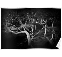 Mangrove Wisdom Poster