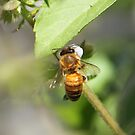 Busy Bee by Jenelle  Irvine
