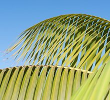 Palm frond detail against sky by brians101