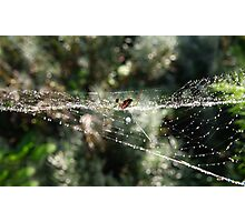 Silver orb weaving spider Photographic Print