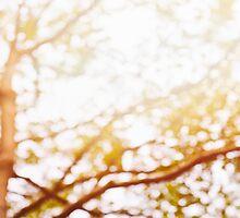 Beneath a Tree by 3523studio