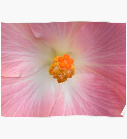 Hibiscus au naturelle Poster
