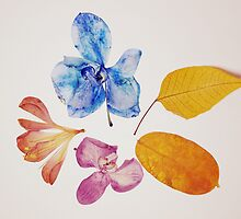 Natural Elements III by Anita Kovacevic
