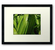 Watery Greenery Framed Print