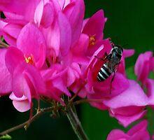 HEAR NO BUZZ-JUST BEE-CAUSE DECORATIVE THROW PILLOW by ╰⊰✿ℒᵒᶹᵉ Bonita✿⊱╮ Lalonde✿⊱╮