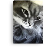 Macy the Grey Cat Canvas Print