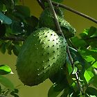 GUYABANO, THE SOURSOP FRUIT - Cancer Remedy- PICTURE/CARD by ╰⊰✿ℒᵒᶹᵉ Bonita✿⊱╮ Lalonde✿⊱╮