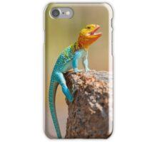 Male Eastern Collard Lizard, Wichita Mountains, Oklahoma iPhone Case/Skin