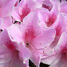 azalea V by Floralynne