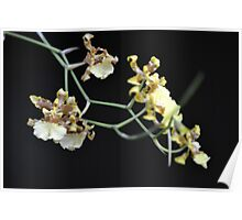yellow dendrobium orchid Poster