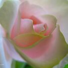Delicate moments by MarianBendeth