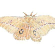Emperor Gum Moth by skultulart