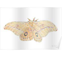 Emperor Gum Moth Poster
