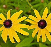 A Pair of Black-Eyed Susan's by John Butler