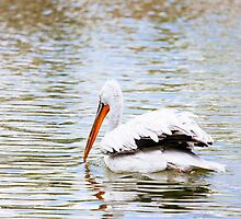 Pelican In The Water by PatiDesigns