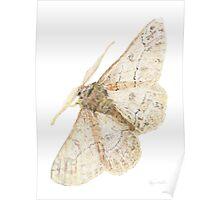 Bogong Moth Poster