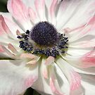 anenome XIII by Floralynne