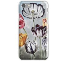 Robert John Thornton - Tulips. Still life with flowers:  bouquet, flowers, bumblebee , carnations, peonies, roses, tulips,  marigolds,  life, garden, blossom iPhone Case/Skin