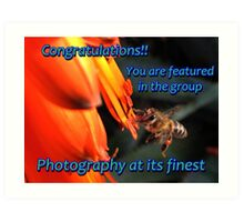 Photography at its finest - Banner: Cape Honeybee with Aloe Art Print