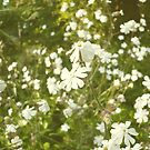 Vintage Flowers by Jess Meacham