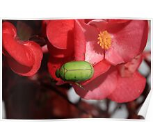 Green Beetle on a Red Flower Poster