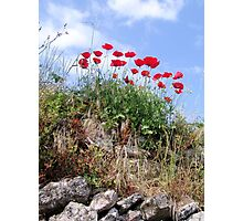 Poppies On A Rock Wall Photographic Print